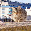 Stock Photo: Cat sits on concrete slab