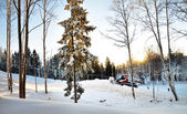 Winter forest with snow thrower — Stock Photo