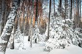 Winterwald — Stockfoto