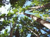 The sun shines through the trees — Stock Photo