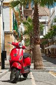 Cadiz, Spain, church, palm — Foto de Stock