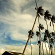 Coconut trees by the beach — Stock Photo