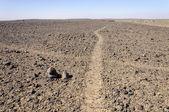 Morocco, Hamada du Draa, path crossing — Stock Photo