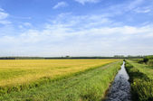 Lomellina (North Italy) Rice fields and channel — Foto de Stock