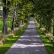 Uphill road under trees — Stockfoto