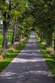 Uphill road under trees — Stock Photo