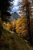 Path in autumn with larches (North Italy) — Stock fotografie
