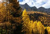 Modříny na podzim (severní itálie) — Stock fotografie