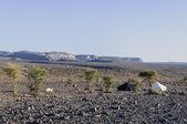 Hamada du dragan (fas taş çöl, fas'ın siyah-beyaz çadırlarda) — Stok fotoğraf