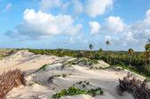 砂丘、pititinga、出生 (ブラジル) — ストック写真