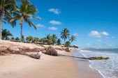 Eroded beach with palms, Pititinga, Natal (Brazil) — Stock Photo
