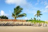 侵蚀的海滩与棕榈树、 pititinga、 产后 (巴西) — 图库照片