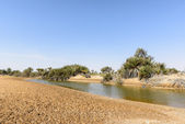 Oasis with pond in desert (Oman) — Stock Photo