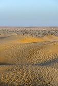 Sand dunes in Oman desert (Oman) — Stock Photo