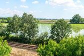 Rail tracks and rice fields, Lomellina (Italy) — Stock Photo