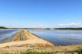 Flooded rice fields, Lomellina (Italy) — Stock Photo