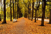 The avenue in autumn park — Stock Photo