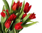 Tulips red — Foto de Stock