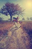 Genç pegasus — Stok fotoğraf
