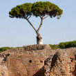 Stock Photo: Mediterranean tree