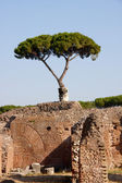 Mediterranean tree — Stock Photo