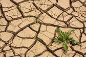 Green grass growing trough dead soil — Stock Photo