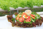 Vegetable salad — Stockfoto
