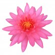 Pink Lotus,Isolated on white with clipping path — Stock Photo