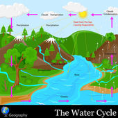 Water Cycle — Stock Vector
