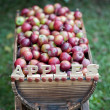 Trolley with apples — Stock Photo