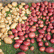 Fresh potatoes — Foto de Stock