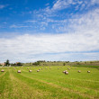 Summer rural landscape with a field and haystacks — Stock Photo #49313633