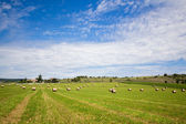 Summer rural landscape with a field and haystacks — Stock Photo