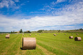 Summer rural landscape with a field and haystacks — Foto de Stock