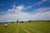 Summer rural landscape with a field and haystacks — Stok fotoğraf