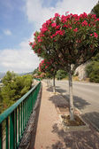 Street in France in Roquebrune, near Monaco, with blooming trees — Stock Photo