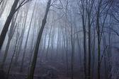Brouillard d'hiver en forêt — Photo