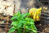Small Garden with Herbs — Stock Photo