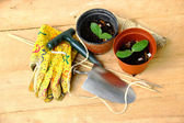 Garden Tools and Flower Pots with Nurselings — Stock Photo