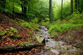 Little Brook with Rocks and Stump Wood — Stock Photo