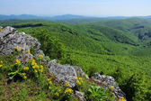 Green Forested Hills Panorama — Stock Photo