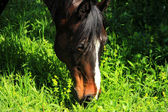 Horse Feeds on Grass — Stock Photo