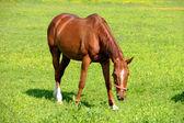 Horse is Feeding on Grass — Stock Photo