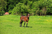 Horse on Grassfield — Stock Photo