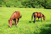 Two Horses with Bridles Pasture — Stock Photo