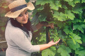 Vine Grower is Checking Grape — Stock Photo