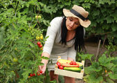 Gardener is Reaping a Vegetables — Stock Photo