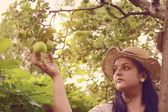 Gardener is Reaping an Apples — Stock Photo