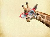Giraffe with Sunglassess — Stock Photo