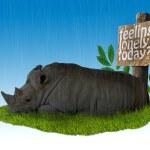 Постер, плакат: Sad Rhino